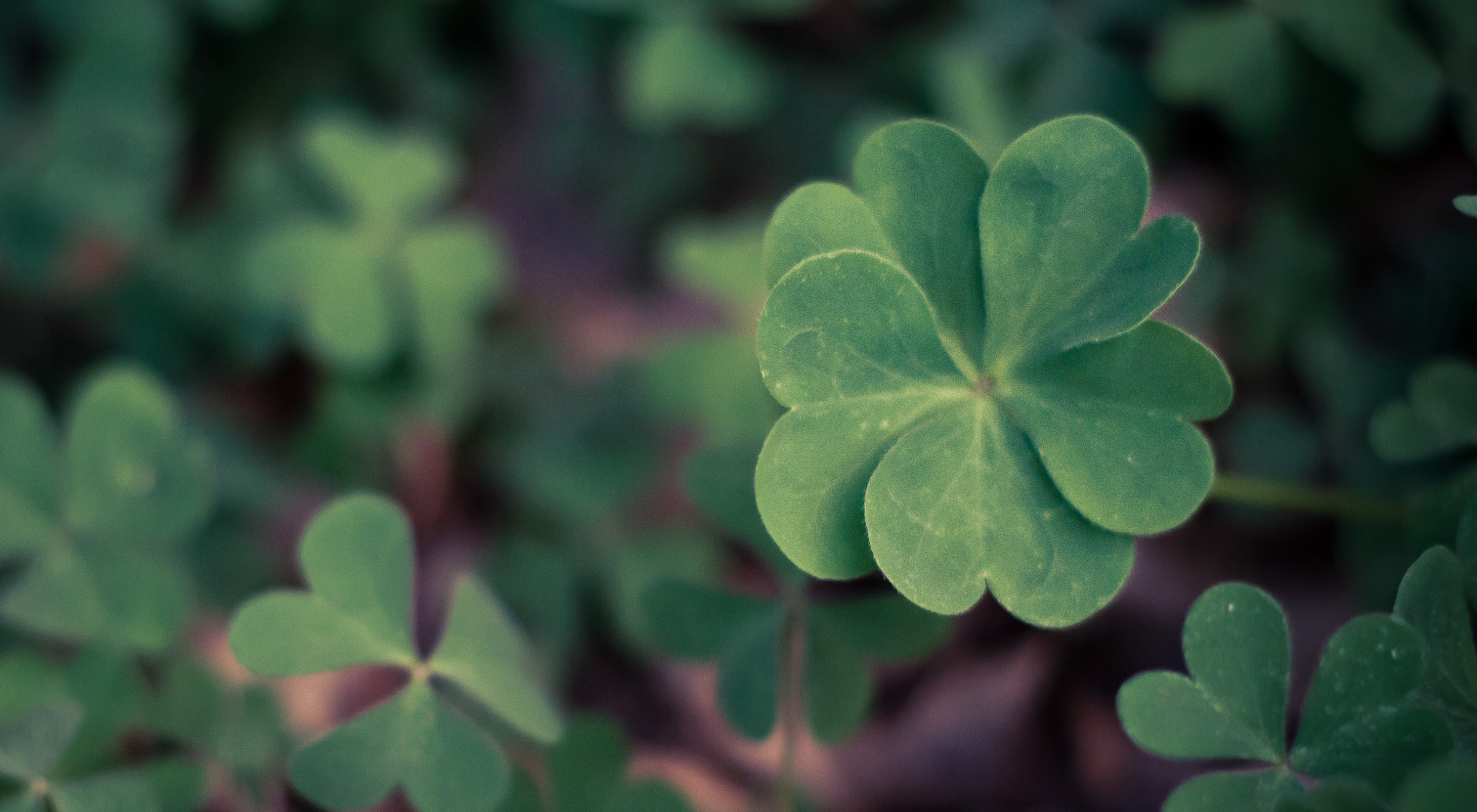 Full Hd 3d Wallpapers 1080p For Mobile Clover Desktop Background Pixelstalk Net