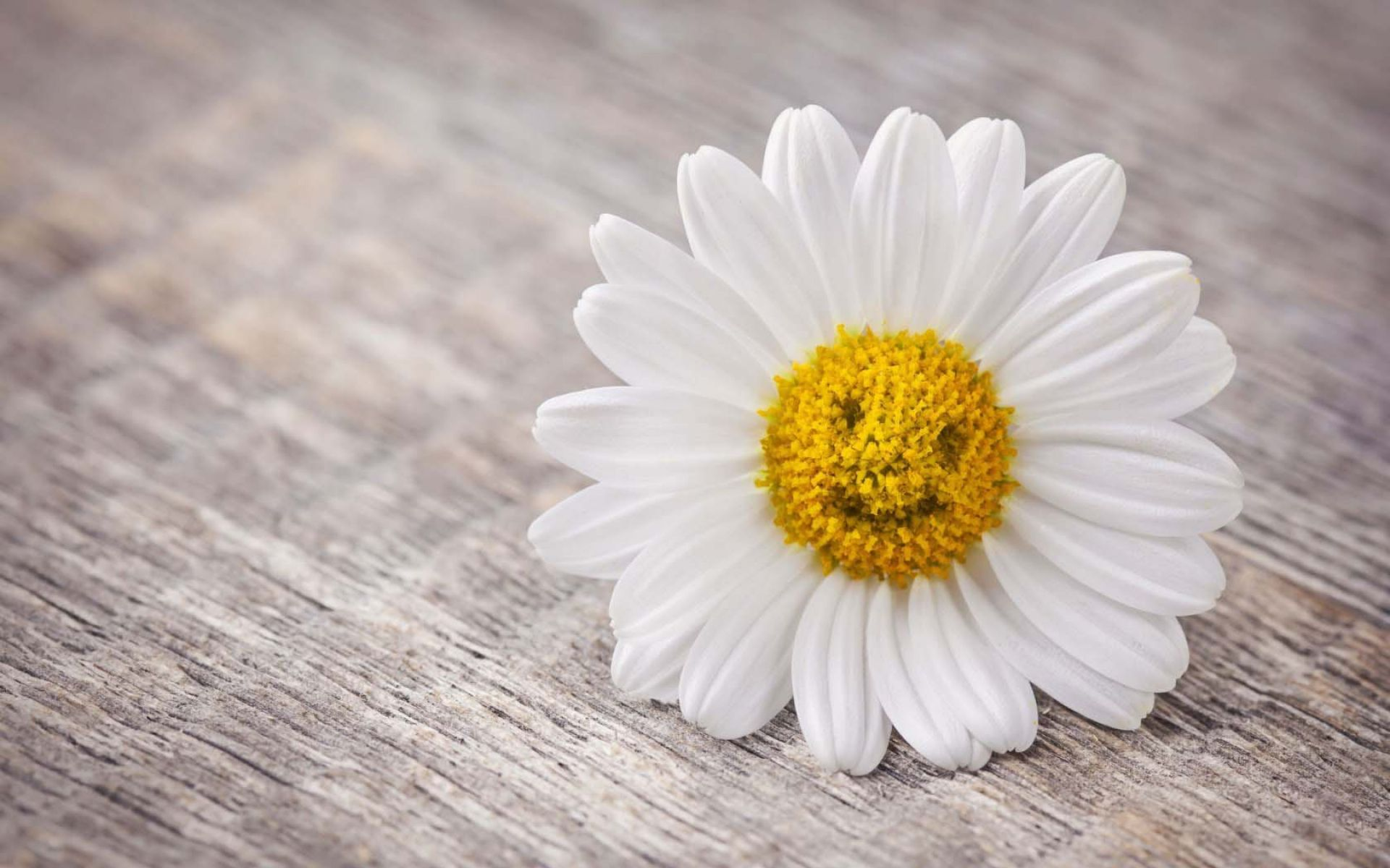 Beautiful Quotes And Inspirational Wallpapers Hd Daisy Wallpaper High Quality Pixelstalk Net