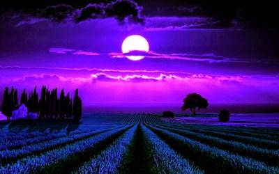 Download Free Lavender Flower Backgrounds | PixelsTalk.Net