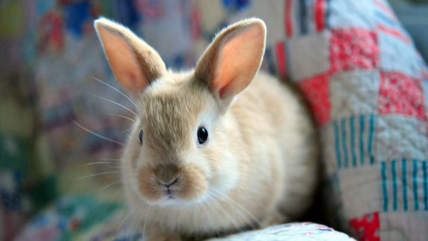 Fluffy And Cute Wallpapers Cute Baby Animal Wallpapers Pixelstalk Net
