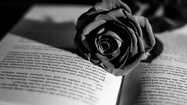 Download Romantic Wallpaper With Quotes Rose Flower Wallpaper Hd Pixelstalk Net