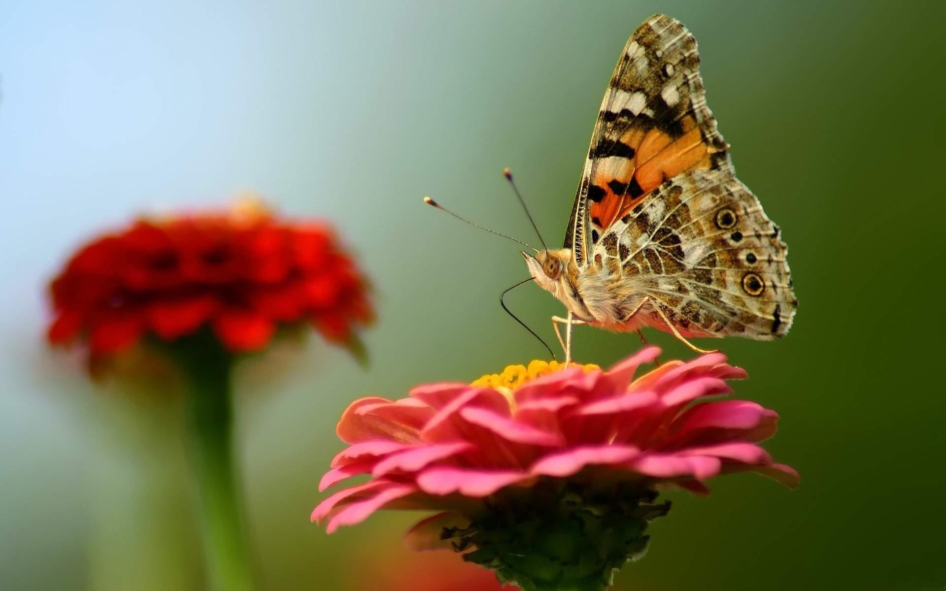 Telugu Quotes Wallpapers Flower Butterfly Wallpaper Pixelstalk Net