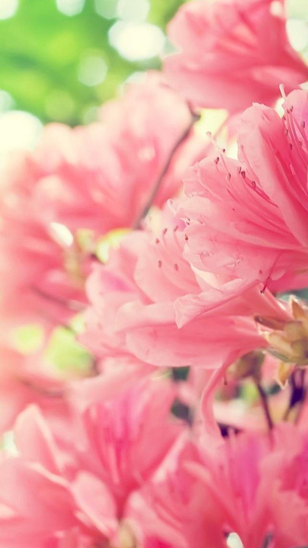 Cute Roses Wallpapers Download Beautiful Spring Wallpapers For Iphone Pixelstalk Net