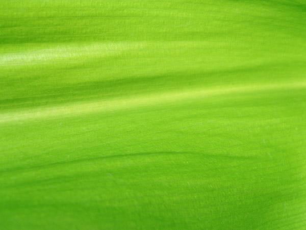 Nature Wallpaper Hd For Pc Desktop 5 Texture Di Foglie Verdi Ad Alta Risoluzione Pixolo It