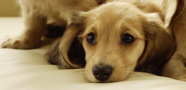 3d Wallpaper Of Dogs Nuova Selezione Di 30 Fantastiche Immagini Di Animali Ad