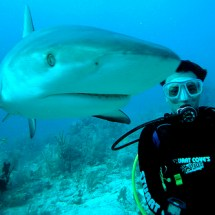 Scuba-Diving-and-Sharks