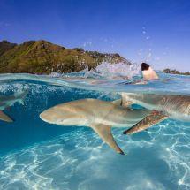blacktip-sharks-bahamas-capozzola