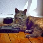 Katzenhaarehrenwort