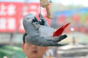 bird smart3