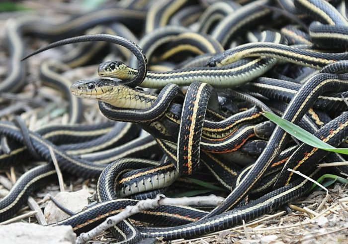 snake house1