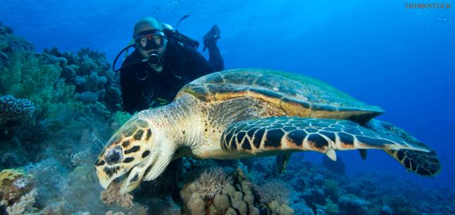 Planit  Job Profiles  Marine Biologist Biology