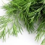Eneldo: propiedades y utilidades en la salud y cocina