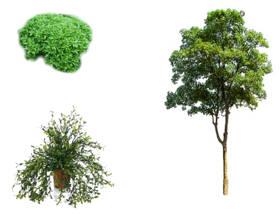 Diferencias entre árboles, arbustos y hierbas