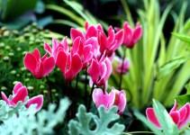 Enfermedades de las plantas: Mosca verde