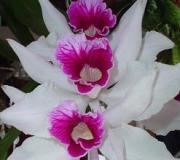 fotos-orquideas