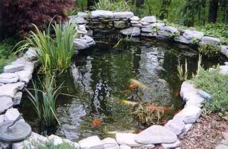 Plantas para tu estanque