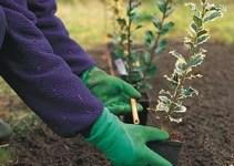 Beneficios de plantar en otoño