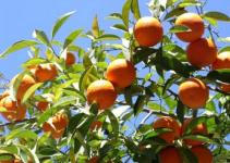 El riego de los árboles frutales