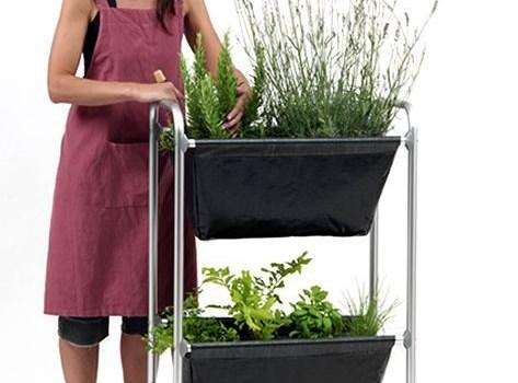 ¿Cómo cultivar plantas medicinales y aromáticas en el hogar?