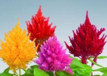 Plantas y flores del mes de diciembre 3
