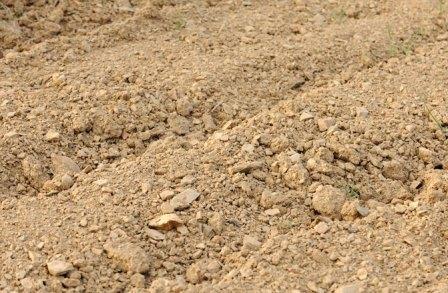 Tipos de suelo para plantas for Suelos y tipos de suelos