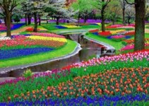 Los jardines de Keukenhof (Holanda) 1