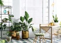 plantas-de-interior-sr4rd