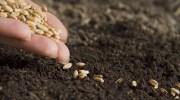 Amazon presentó su tienda de semillas y plantas