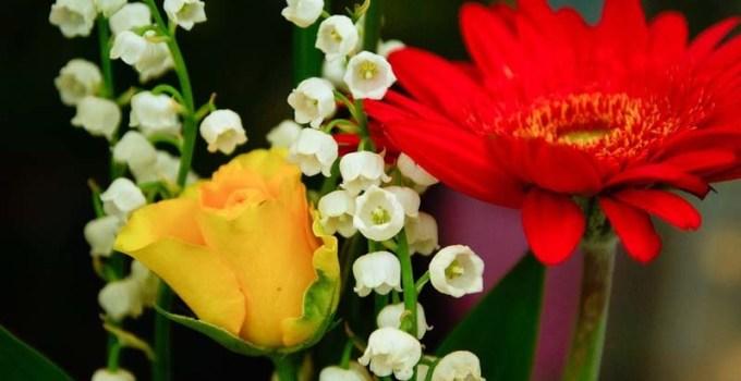 como-cuidar-las-flores-frescas