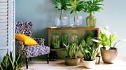 Beneficios de tener plantas en el hogar