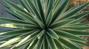 Un estudio demuestra que las plantas sienten