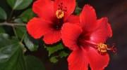 5 plantas que verás este verano en la playa