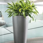 Dracaena Lemon Lime in Lechuza Rondo Silver