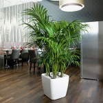 Palm Neanthe Bella in Lechuza Cubico White