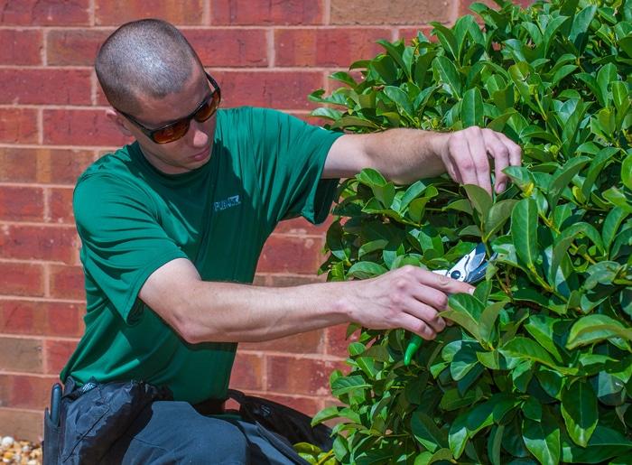 Jobs Openings - Office Plantslandscape technician - landscape