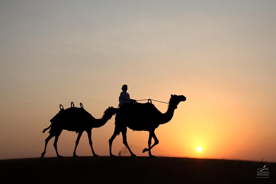 Egypt Pyramids Hd Wallpapers Enjoy A Camel Desert Safari In Dubai