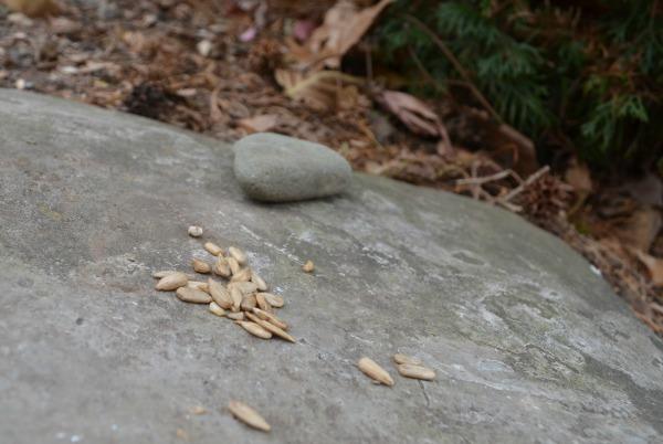 Family acts of kindness activity: Give thanks with birdseed on a nature walk