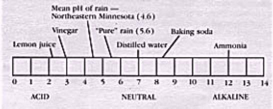 ph scale diagram pdf