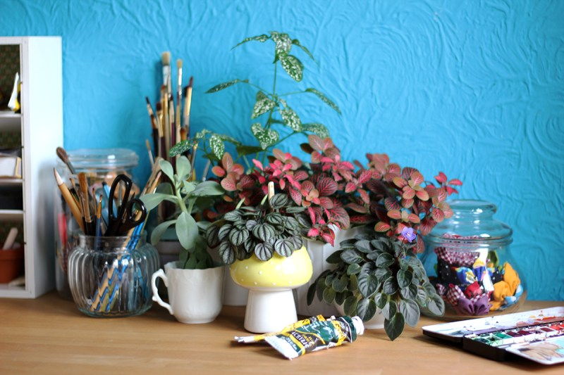 Urban Jungle Bloggers - 1 plant, 3 stylings