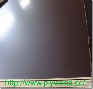 Film Faced Plywood (Glossy or Matt ?)
