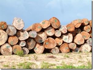 Hardwood Logs