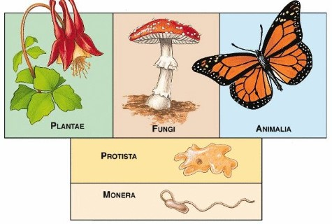 Five Kingdom Classification of Plants and Animals PMF IAS - protista examples