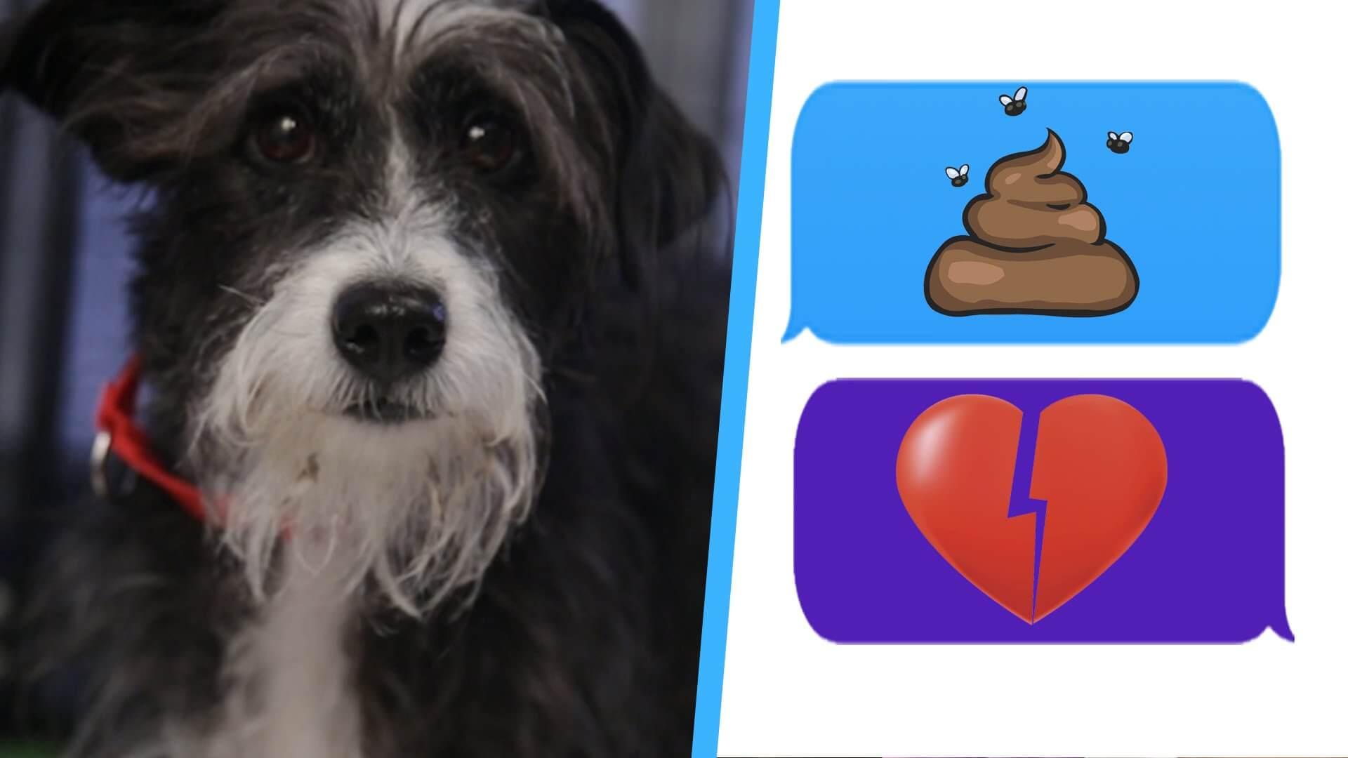 Sweet Dogs On Social Pocket Pitbull Miniature Pitbulls Haha Ny Dog Eat A Pepsi bark post Funny Dog Eat A Pepsi