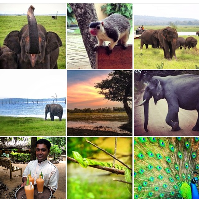 Instagram images from the #TBCasia Trip to Sri Lanka