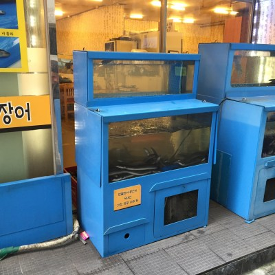 seoul south korea street food eels