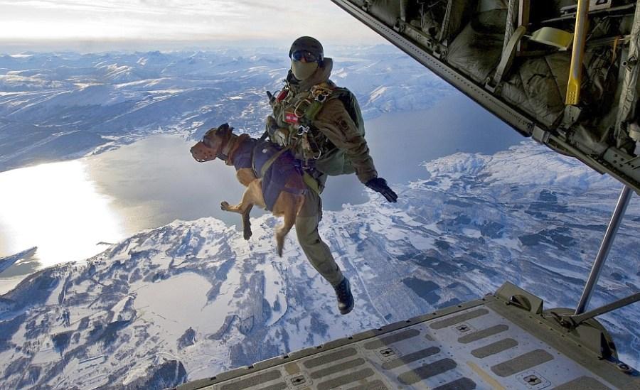 Navy Seal Combat Dogs Navy Seal Dogs Kick Ass