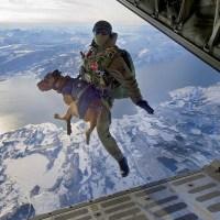 Navy SEAL Dogs Kick Ass!