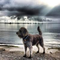 Dog poisoned by sachet in jerky treats; diagnosis: Iron intoxication