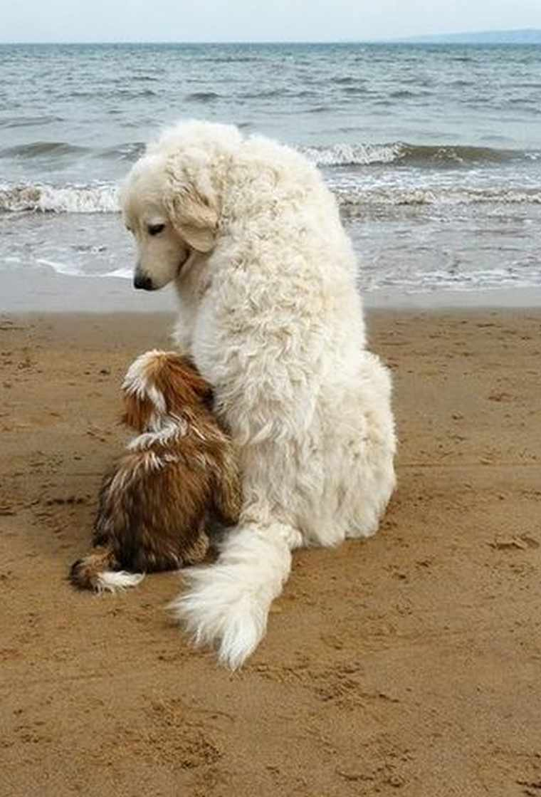 dog best friends snuggle on the beach cute