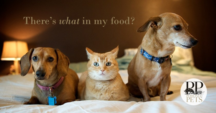 cat-dog-what's-in-pet-food